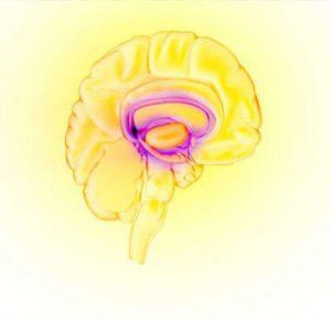 drug-use-brain_reward_circuit